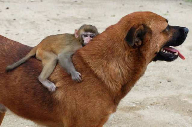 1420032407423079 The Kindness These 53 Animals Showed Each Other Will Make You Cry In Public. #32 is the Cutest!