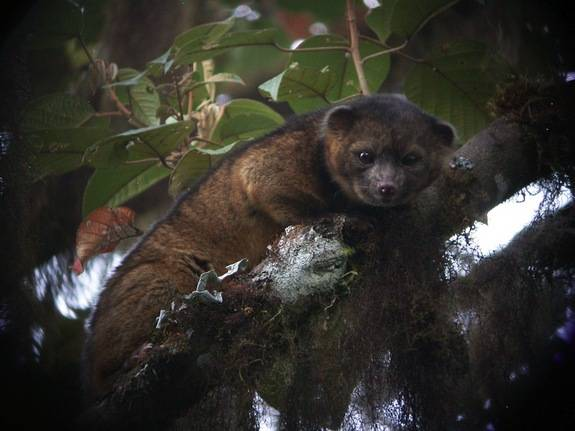 1420032501248032 Scientists Discovered These 17 Species Existed In 2014 And...Wow