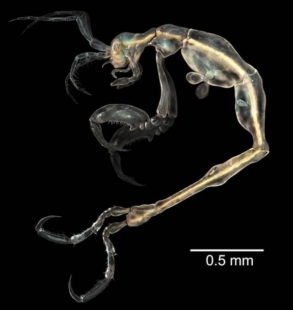 1420032501749201 Scientists Discovered These 17 Species Existed In 2014 And...Wow