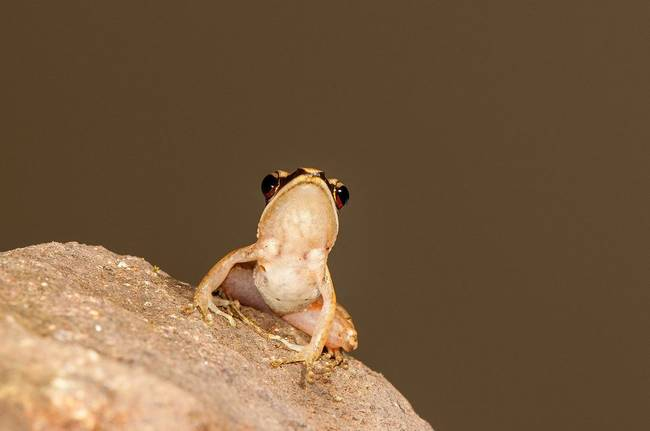 1420032502606649 Scientists Discovered These 17 Species Existed In 2014 And...Wow
