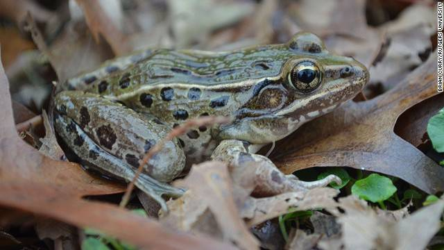 1420032504234249 Scientists Discovered These 17 Species Existed In 2014 And...Wow