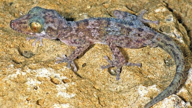 1420032504712019 Scientists Discovered These 17 Species Existed In 2014 And...Wow